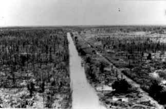 An area defoliated by US chemical warfare in South Vietnam which they were